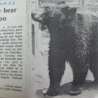baby-bear-tacoma