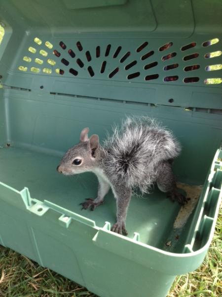 nikki_squirrel_2